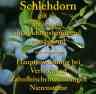 Steckbrief Schlehdorn