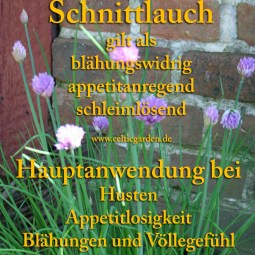heilpflanze_schnittlauch