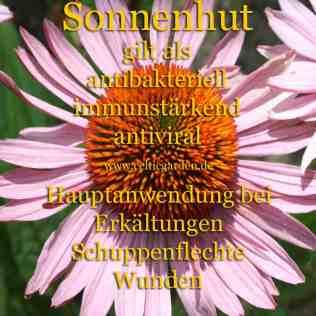 heilpflanze_sonnenhut