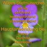 heilpflanze_stiefmütterchen