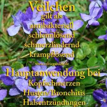 heilpflanze_veilchen