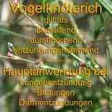 Steckbrief Vogelknöterich