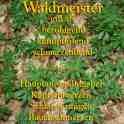 wakdmeister steckbrief