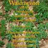heilpflanze_waldmeister