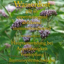 heilpflanze_wasserdost