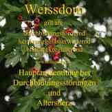 Steckbrief Weissdorn