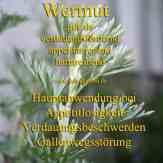 Wermut Steckbrief