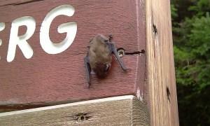Fledermäuse im Garten