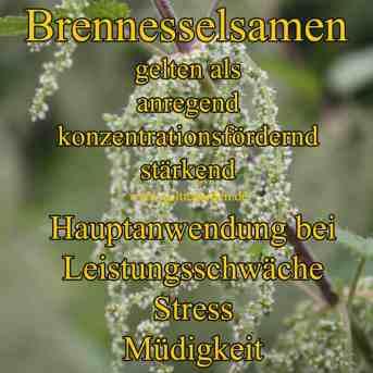 Steckbrief Brennesselsamen