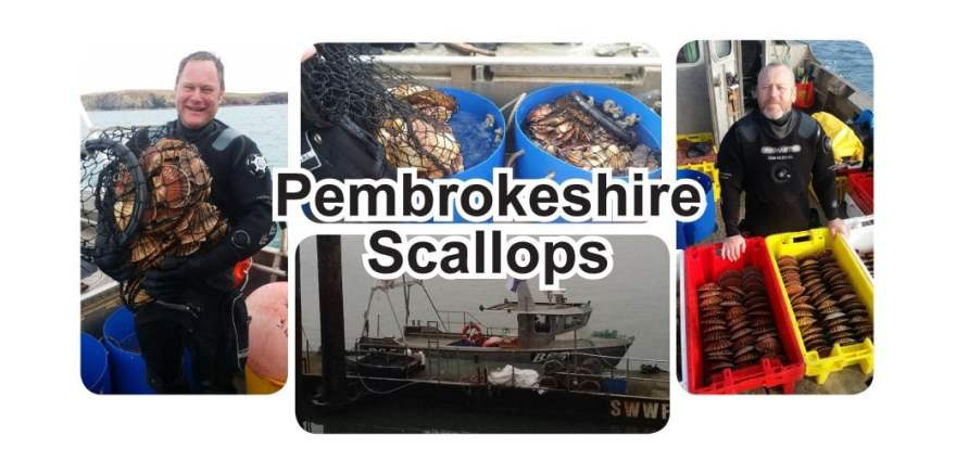 Pembrokeshire Scallops, sustainably and locally caught, oh and they're bloomin' tasty!