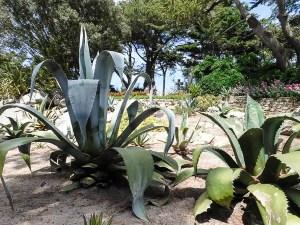 Botanic Garden Georges Delaselle, Ile de Batz