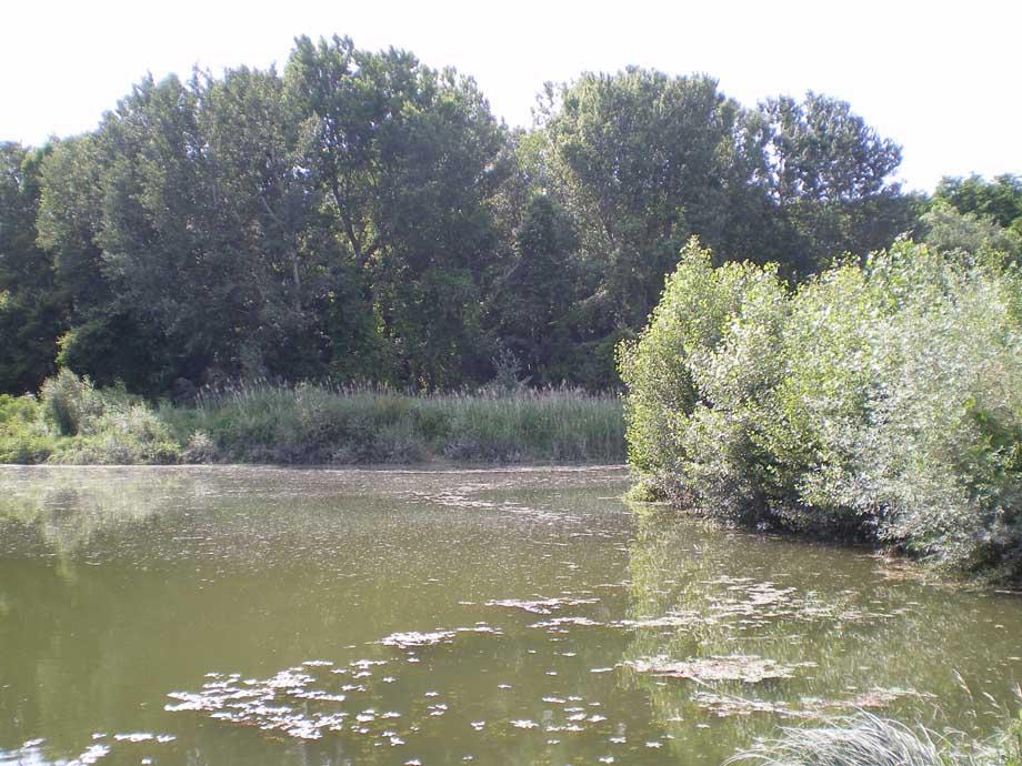 Ripisylve Bourg-St-Andeol (2)