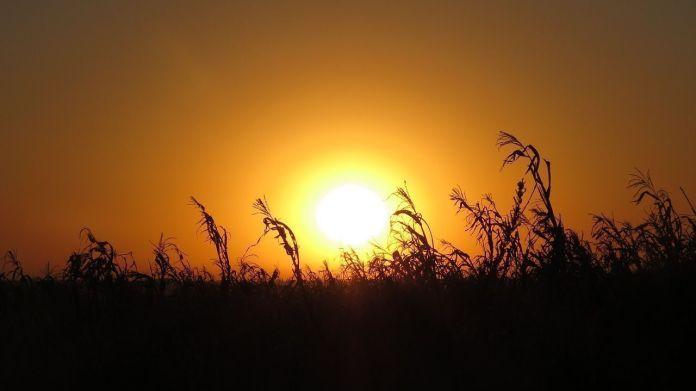 Sol Milho Colheita Paisagens Lavoura Céu