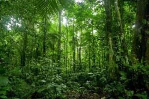 importância das florestas