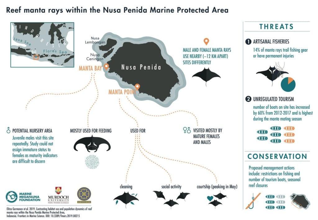 Mantas in Nusa Penida's MPA