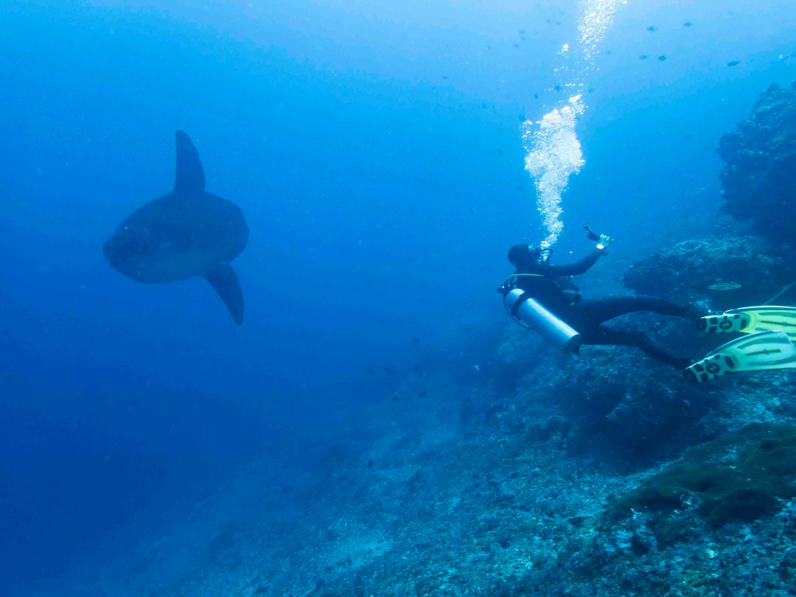 From GoPro's to professional underwater cameras: many divers collect valuable data during their dives without knowing it.
