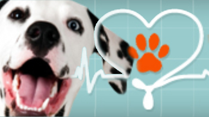 Digital Life 365 - Section Photos - Healthy Pets