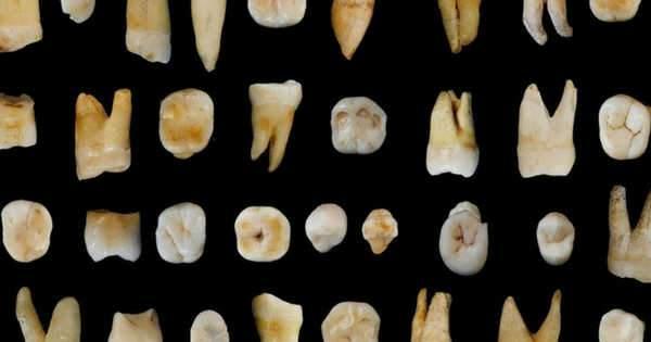 Dientes fosilizados podrían revelar la historia de nuestra especie