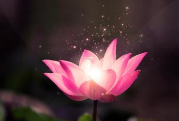 lotusro
