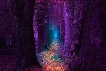 purple lane of trees