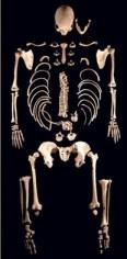 The Good Old Days -bones