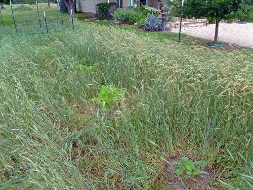 Don Garden Planting 2