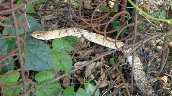 Snake Trap 2