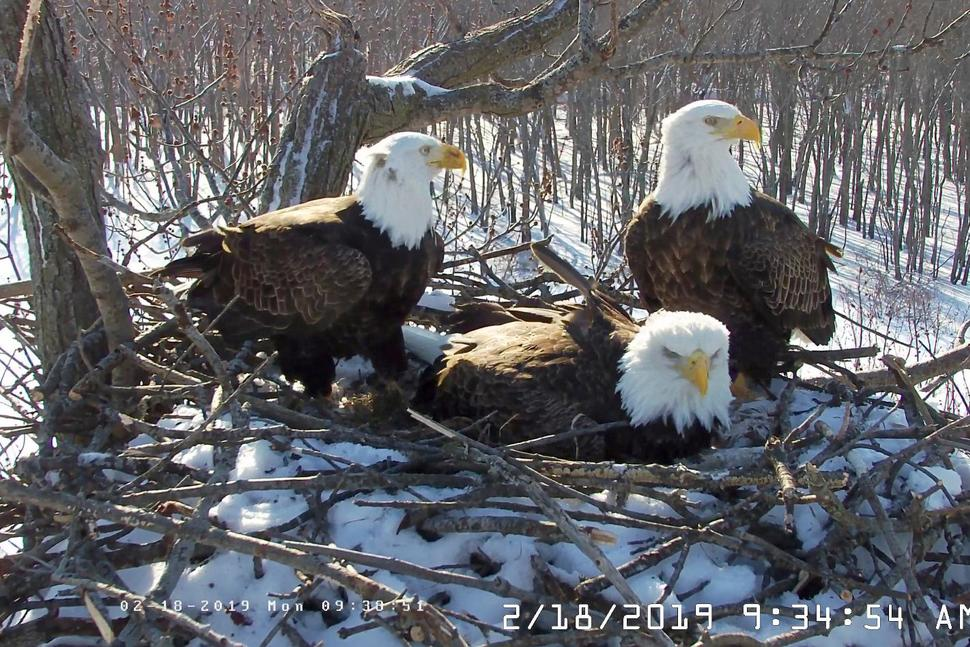 Eagles_1555427805608.jpg