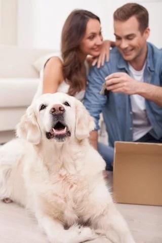 Shipping pets overseas