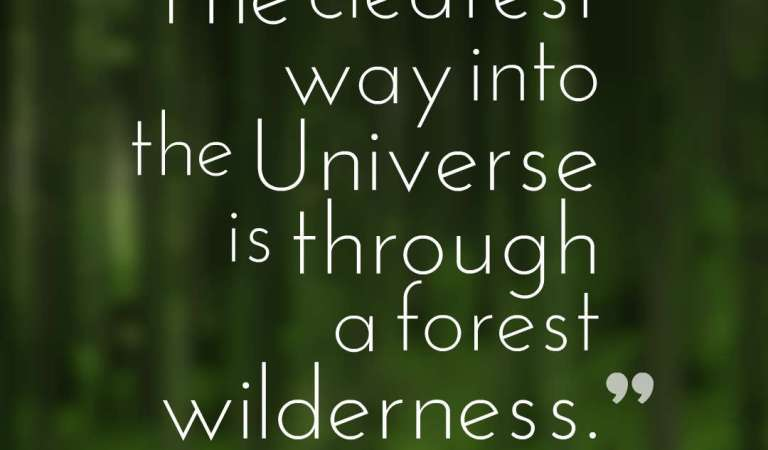 45 Inspirational Forest Quotes And Sayings
