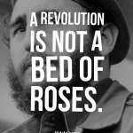A revolution is not a bed of roses.