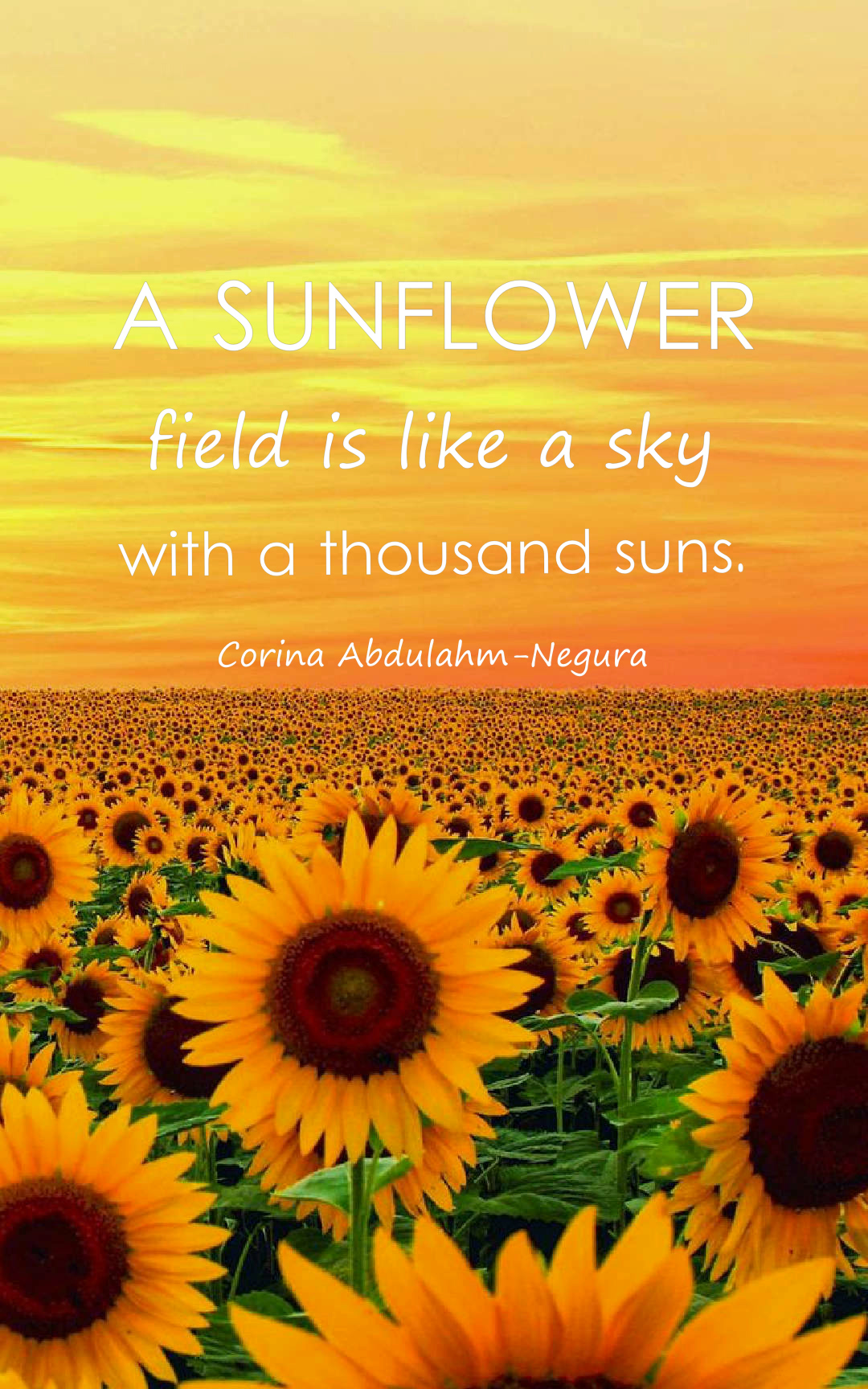 23 Beautiful Sunflower Quotes with Images