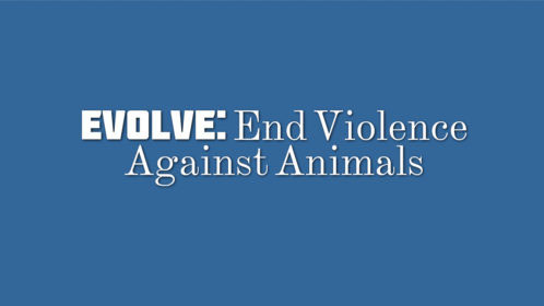 50+ Animal Abuse Quotes and Slogans
