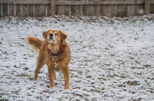 dog outside in winter
