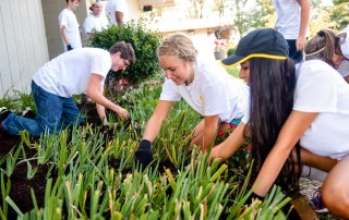 first-year students work on landscaping