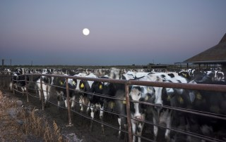 Night of the Supermoon Dairy Farm - 550 Cows, 2015from the series CENSORED LANDSCAPES. Photo by Isabella La Rocca González.