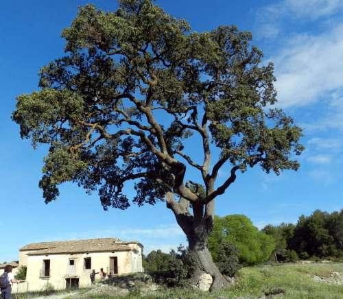 3 Banyeres-Font de la Coveta - Bocairent