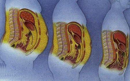 Graisse abdominale © Good Health
