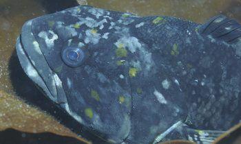 El Dr. Luis Miguel Pardo analizará la dieta de los peces antárticos. Fotografía: Luis Miguel Pardo.