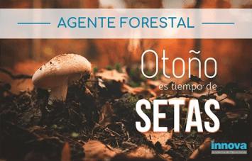 oposiciones a agente forestal madrid