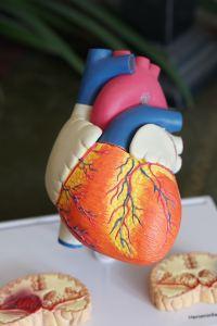 Escherichia Coli e infarto