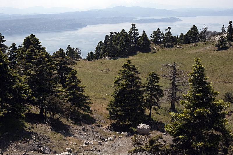 Quando lupi, orsi e gazzelle scorrazzavano per i boschi dell'isola di Eubea