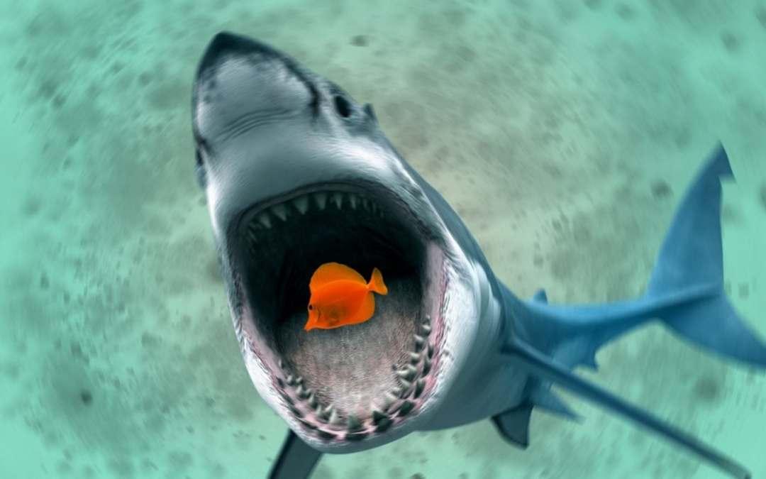 clausola di garanzia: squalo mangia pesce piccolo