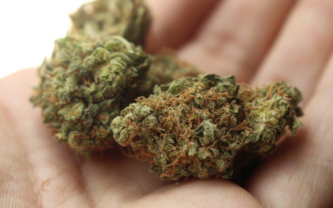 """Libera vendita della cannabis < 0.5% thc: meglio il """"fumo"""" dell'arrosto?"""