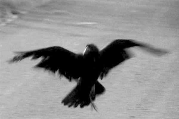 """Il Corvo in """"Uccellacci e uccellini"""""""