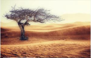 prevents rapid climatic changes
