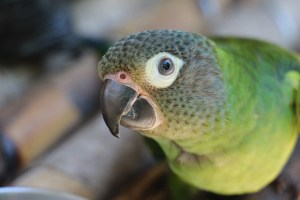 Centro Urku lorito amazónico