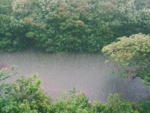 Agua de lluvia centro urku licencia CCO