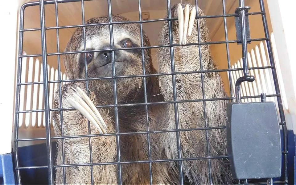 Tráfico ilegal de especies, un enemigo silencioso