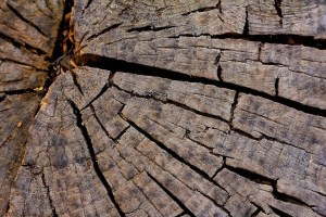 Corteza de árbol Centro Urku CCO